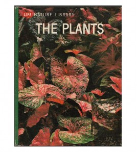 THE PLANTS